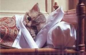 如何让猫咪安全度过寒冷冬天